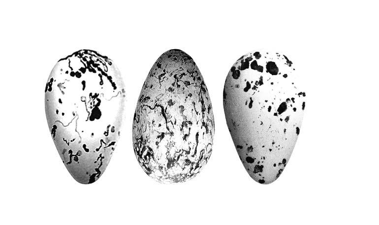 egg image2